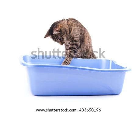 Brown tabby cat playing with her litter box, on white
