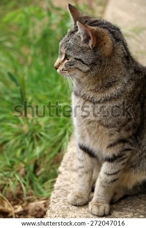 Brown tabby cat sitting in th garden. Vertical format, natural light, selective focus.