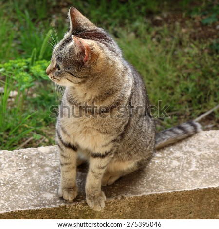 Brown tabby cat sitting in the garden. Square format, natural light, selective focus.  - stock photo