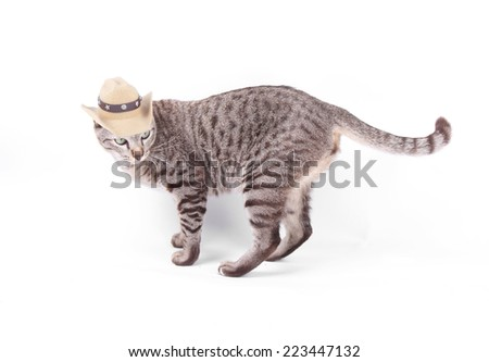 Brown tabby cat wearing cowboy hat isolated on white - stock photo