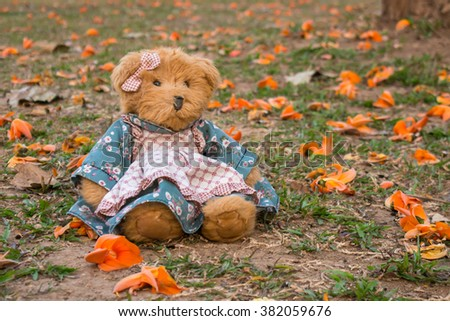 Brown teddy bear and Bastard Teak, Bengal Kino or Flame of the Forest flower on green grass  - stock photo