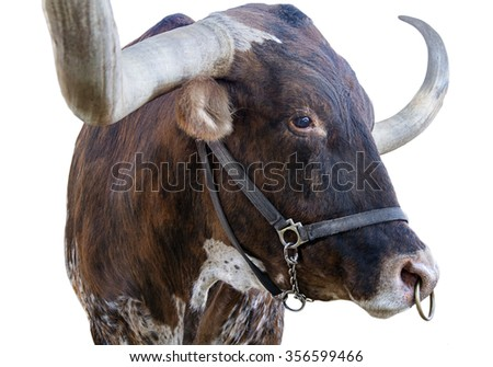 brown Texas longhorn isolated - stock photo