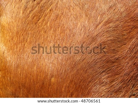 brown textured cowhide - stock photo