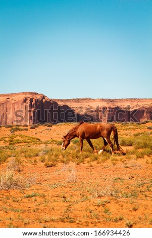 Brown wild horse in a desert at monument Valley, Arizona, USA - stock photo