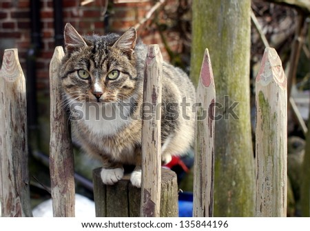 brownish cat sitting on the fence - stock photo