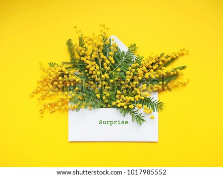Brunches beautiful mimosa flower on yellow stock photo download now brunches of beautiful mimosa flower on yellow background mightylinksfo