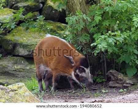 brush hog - stock photo