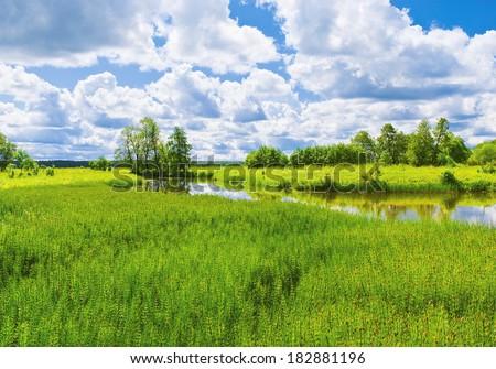Brush of scouring rush (rough horsetail, Equisetum hyemale) on river bank - stock photo