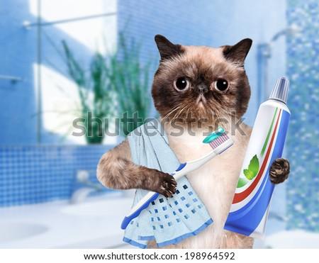 Brushing teeth cat. - stock photo
