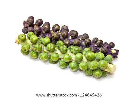 Brussel sprouts on the stem or stalk.isolated on a white studio background.