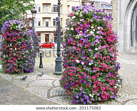 BRUSSELS, BELGIUM - JUNE 30, 2010: The flowers of surfinia often decorate the streets of european cities, it's undemanding  and nice looking plant, on June 30 in Brussels.