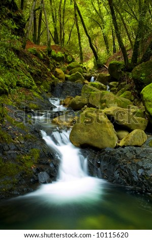 bubbling brook in the forest - stock photo