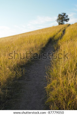 Buck Hill trail, isolated tree and grassland - stock photo