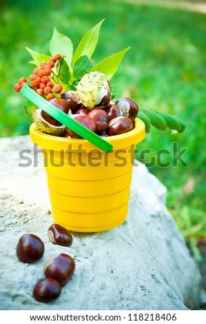 bucket of chestnuts and rowan on stone - stock photo