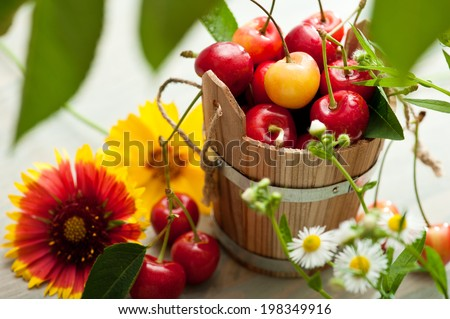 Bucket of red and yellow cherries with summer herbs and flowers - stock photo