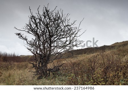 Buckthorn in autumn on Texel, a Dutch Island.
