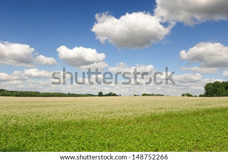 Buckwheat blossom field with blue sky and clouds. Landscape orientation  - stock photo