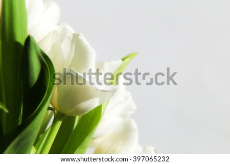 bud white tulips