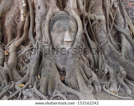 budda head traped in the tree roots - Ayutthaya - Thailand