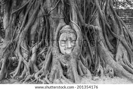 Buddha head encased in tree roots at the temple of Wat Mahatat in Ayutthaya ,Thailand. - stock photo