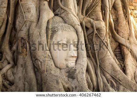 Buddha  head image in trunk at Wat  Mahathad  Ayutthaya  Thailand  - stock photo