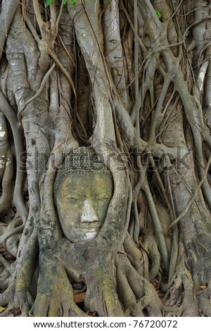 Buddha head in a tree, Thailand