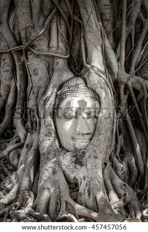 Buddha head in Banyan tree root at Wat Mahatat, Ayutthaya, old capital of Thailand