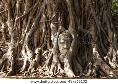 Buddha head in tree - stock photo