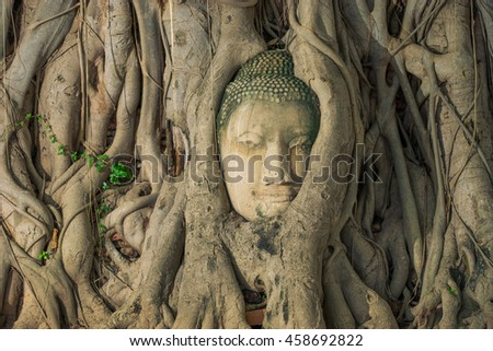 Buddha head looking off to the side embed in tree