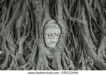 Buddha head overgrown by fig tree in Wat Mahatat, Ayutthaya historical park - stock photo