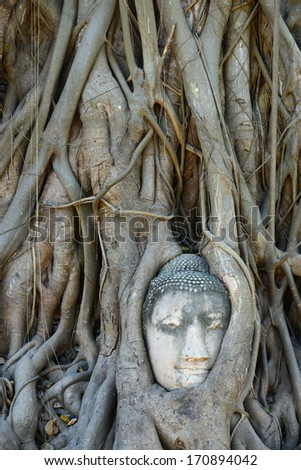 Buddha Head Surrounded by Roots in Ayutthaya