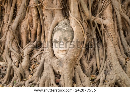 buddha head traped in the tree roots - Ayutthaya - Thailand - stock photo