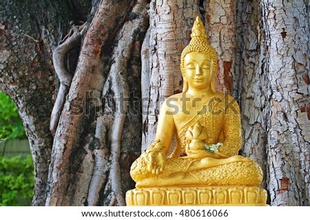 Buddha image sitting under Bodhi tree