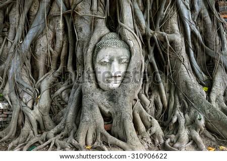 Buddha's head in tree roots at Wat Mahathat, Ayuthaya - stock photo