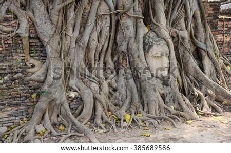 Buddha s head old buddha Temple wat phramahathat of Ayuthaya Province Thailand - stock photo