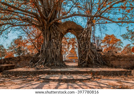 Buddha statue in the Tree roots at Wat Mahathat temple, Ayutthaya, Thailand - stock photo