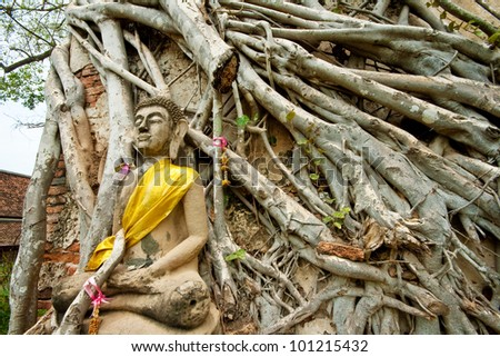 Buddhas gripped by boddhi tree roots in the ancient thai capital of Ayutthaya, Thailand - stock photo