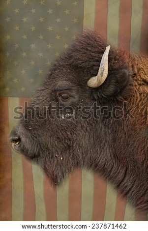 Buffalo close-up head shot profile view with an American USA flag background.   - stock photo
