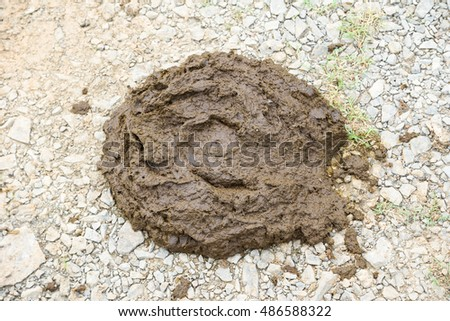 Buffalo feces on the ground. it  is a natural organic fertilizer.