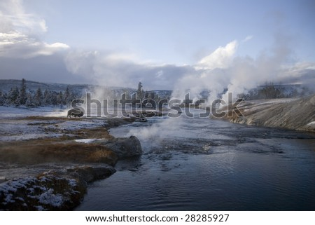 Buffalo grazing in by a steaming  geyser - stock photo