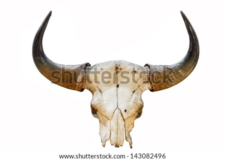 buffalo horn with background isolated - stock photo