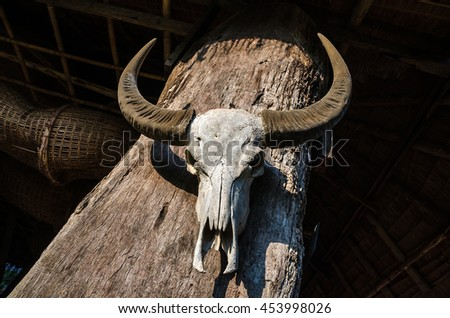 buffalo skull bone with horns hang up on wood wall with sun light - stock photo