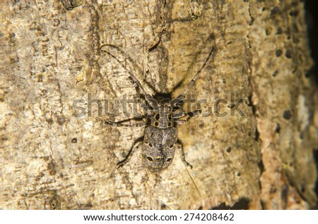 Bug insect on wooden and natural background