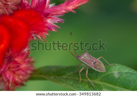 Bug on green leave and red flower - stock photo