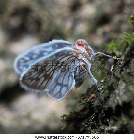 Bugs and Insects : Tree hopper - stock photo