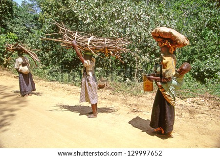 BUIKWE REGION, UGANDA - JULY 26: An unidentified farmers carry cultivars for sale on July 26, 2004 in Buikwe region, Uganda. People in rural areas of Uganda depend on farming. - stock photo