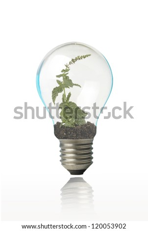 bulb and plant inside
