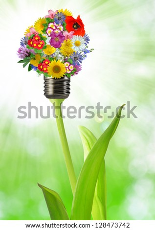 bulb from  flowers on green background - stock photo