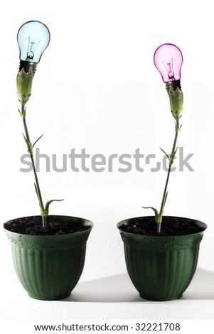 bulb in flower Growing ideas - stock photo