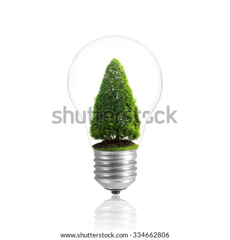 Bulb light with tree inside, isolated on white with clipping path.
